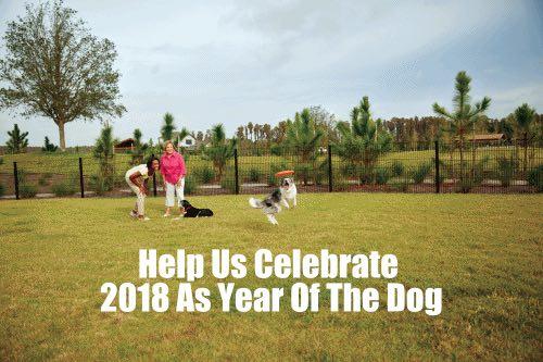 Dog Contest Gif.jpg